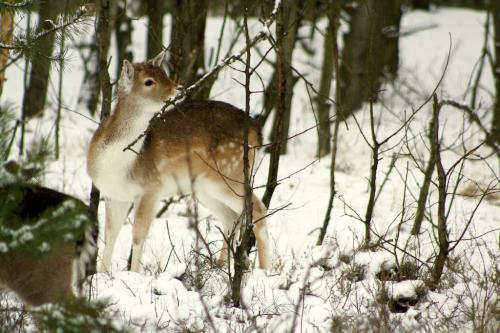 05_Schoenower Heide_winterlich