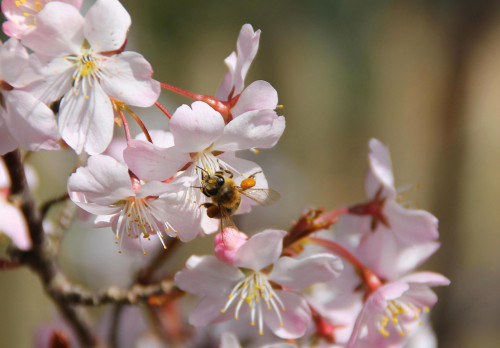 Pollenpaket